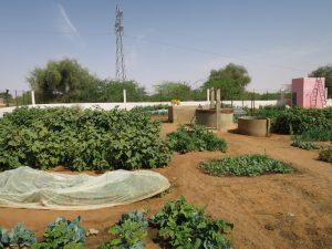 Kaedi - Jardin de la coopérative
