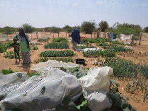 Kaedi - petit jardin collectif