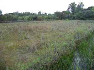 Manakara - une rizière à sec