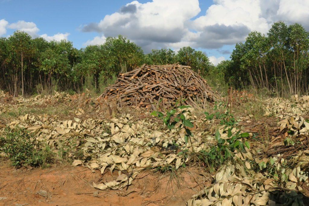 Moramanga-Ambat.-meule à charbon en préparation