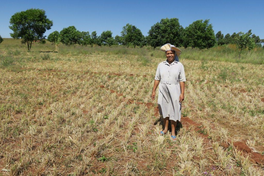 tsiroanomandidy-soeur supérieure suzanne sur leur champ après la récolte du riz
